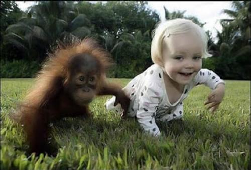 Mirror Neurons = Monkey see monkey do.